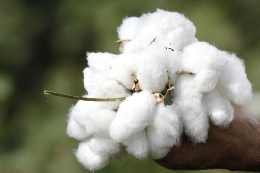 Pakistan lifts ban on Indian cotton imports